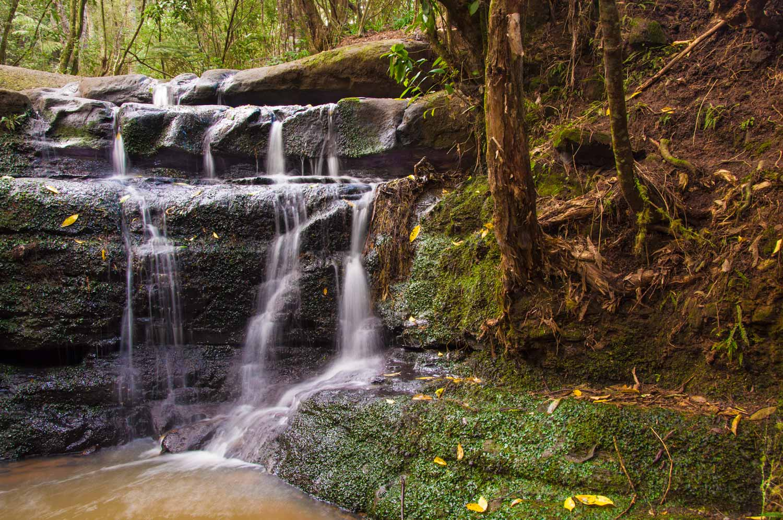 Kaipatiki Creek.